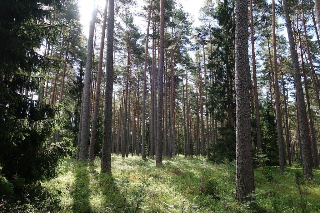 Eesti Erametsaliit: Eesti üks ülesanne EL eesistujamaana on leida metsakasutuse reguleerimiseks õiglane alus