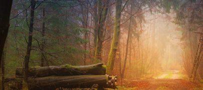 Tasakaal keskkonnahoius on võimalik saavutada vaid koos ühiseid väärtusi kaitstes