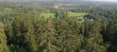 Erametsaliit: metsa müügitehingute maksureform on hädavajalik
