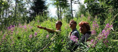 Erametsaliit ja Erametsakeskus otsivad parimaid metsamajandajaid