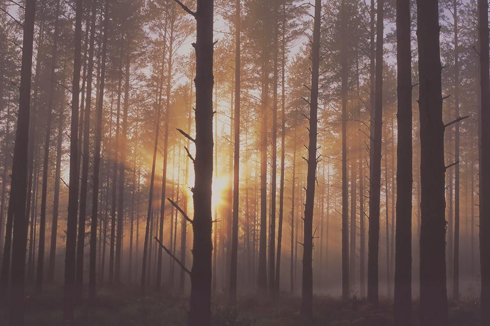 Erametsaliit: Roheaktivism ja omandivaenulikkus liidab metsaomanikke
