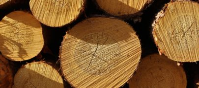 Mets kui tööstuse tuluallikas: väike puidusõnastik