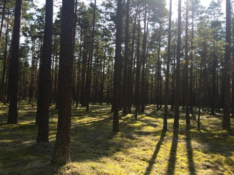 Eesti metsad 2017