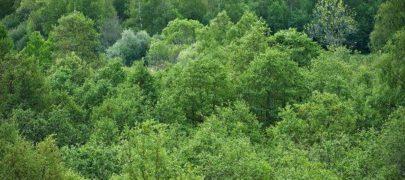 Metsasektor avab kõigile huvilistele oma uksed