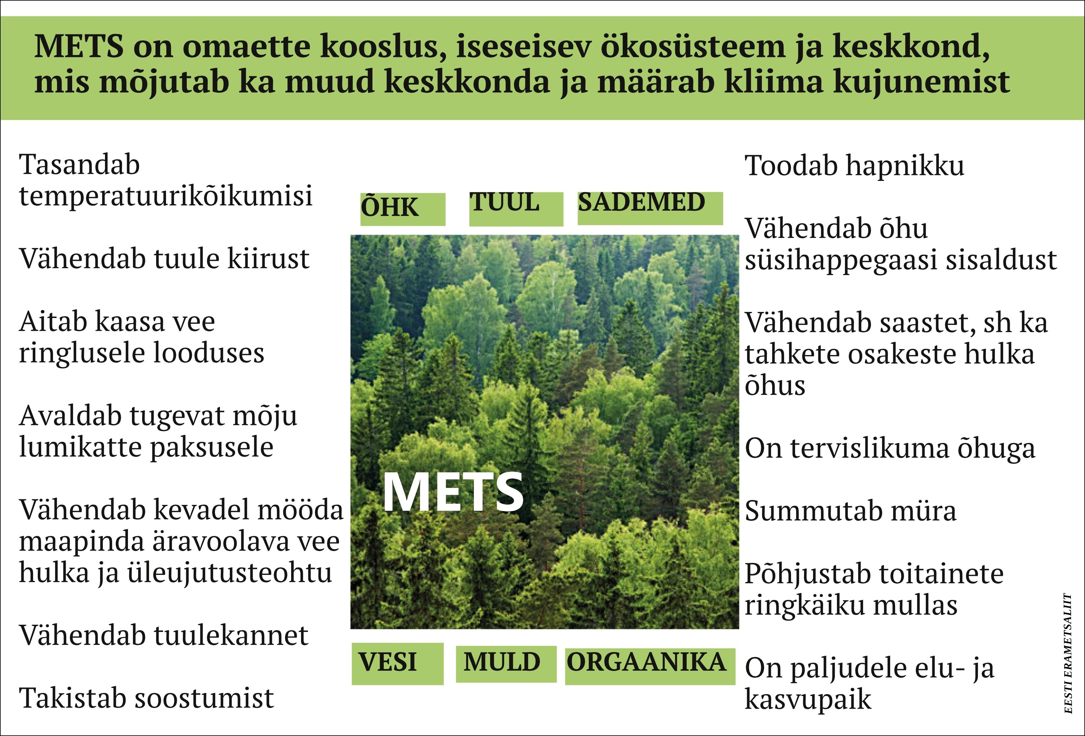 Inimene kaitseb metsa, aga mets kaitseb ka inimest