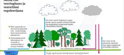 Mets parandab vete kvaliteeti