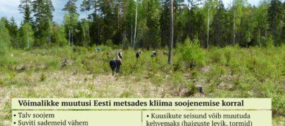 Mets mõjutab kliimat ja vastupidi