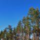 Maksusoodustus motiveeriks omanikke metsa müümise asemel majandama