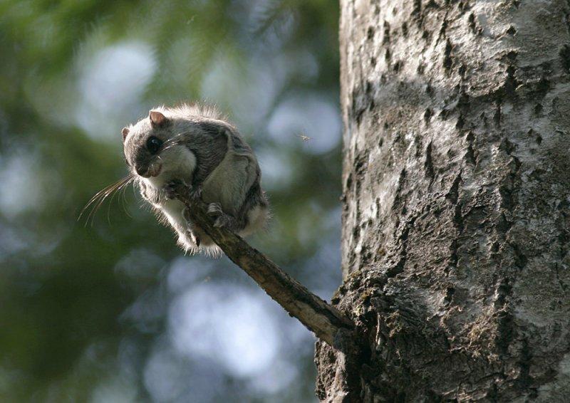Looduse kaitsmine ei õigusta metsaomanikest üle sõitmist