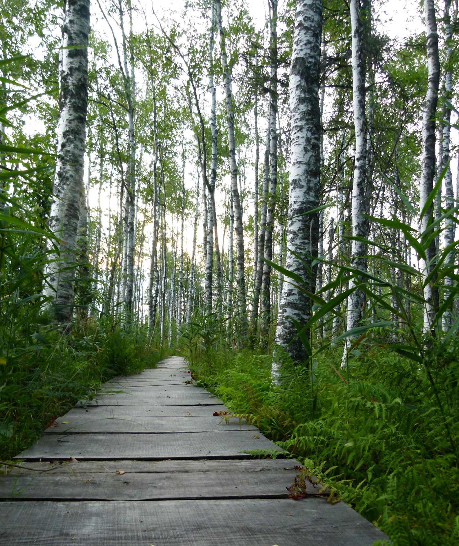 Eestlased ja mets