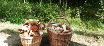 Metsast saab seeni-marju ja meelerahu