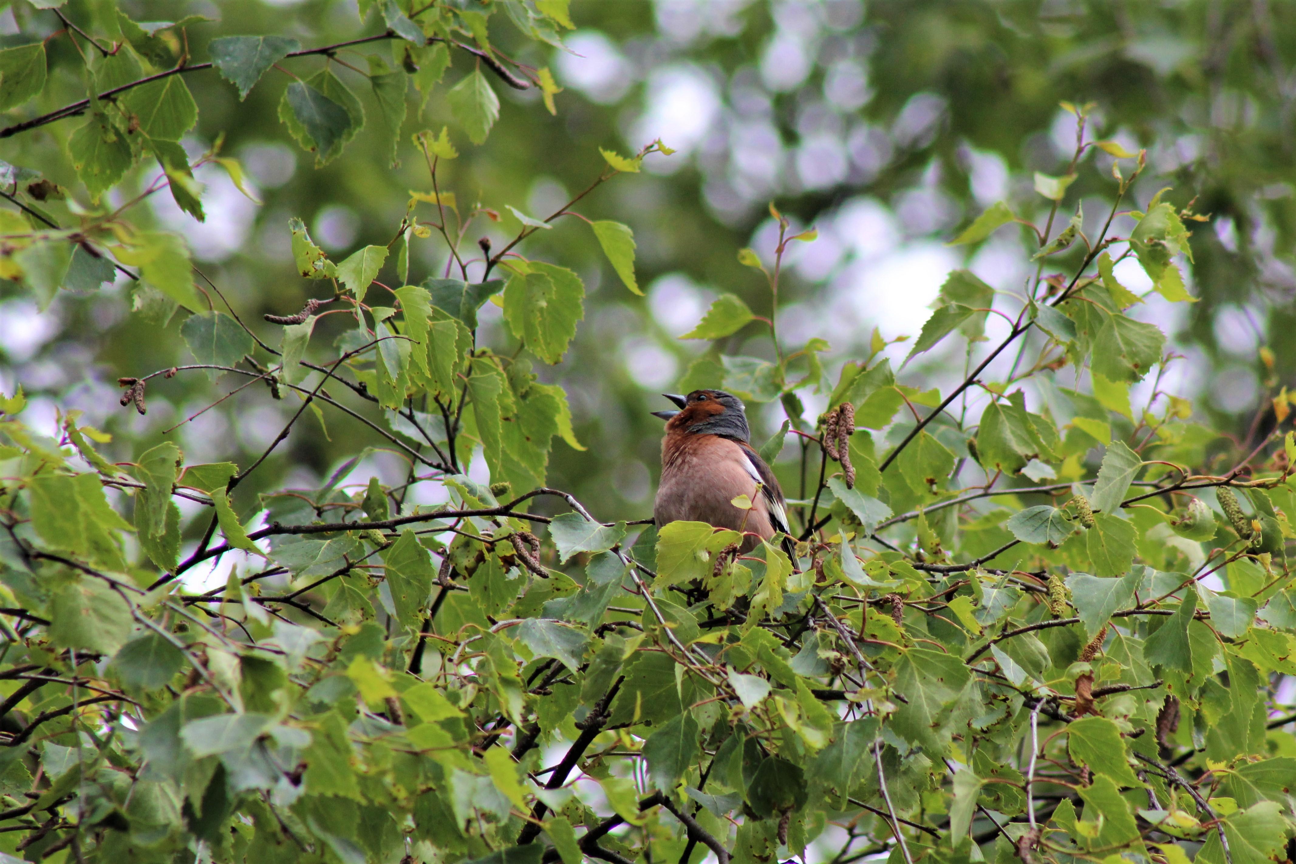 Lindude arvukuse mõjutajaid peab täpsemalt uurima