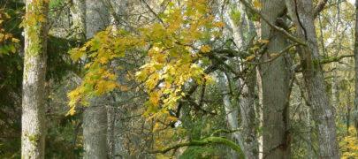 Mets maandab pingeid ja teeb tervemaks