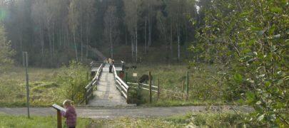 Mets toidab jahimeest