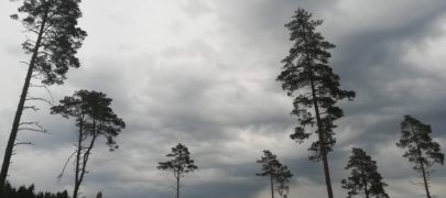 Metsa ja metsasektori roll kliimamuutuste vastu võitlemisel peab suurenema