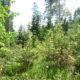 Iga metsaomanik on maastikukujundaja