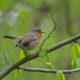 Eesti erametsaomanike vastus õiguskantslerile: looduse ja lindude hoidmine on meie kõikide, mitte ainult metsaomanike, vastutus.