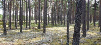 Erametsaliit: Metsaomanike ebavõrdne kohtlemine peab lõppema