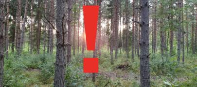 Hoiatus! Petturid himustavad eakate metsa