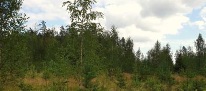 Euroopa metsasus kasvab
