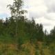 Vastus ELFile: hüüdlausetega kliimaneutraalsust ei saavuta