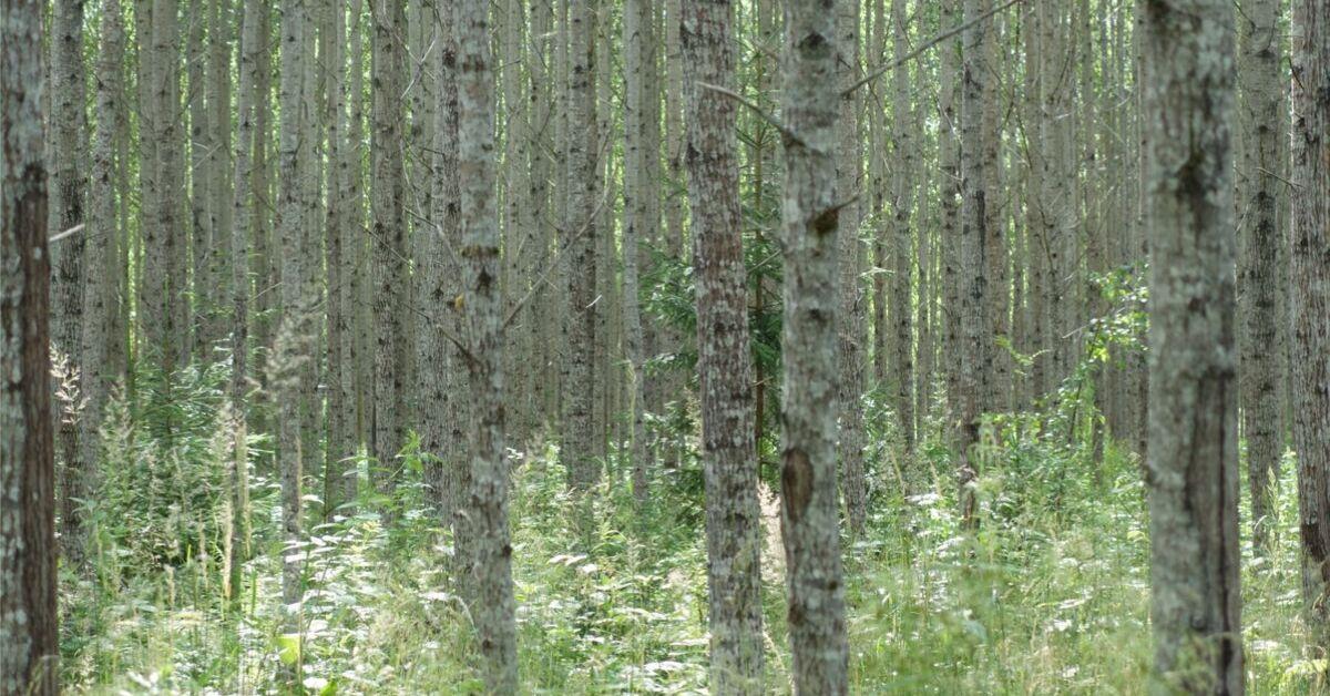 Eesti Erametsaliit kutsub üles kliimaneutraalsuse saavutamise nimel rohkem pingutama