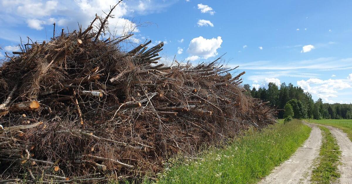 Väheväärtuslik puit pakub põlevkivile kliimasõbralikuma alternatiivi