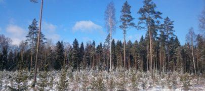 Uus metsanduse arengukava peab austama metsaomanike põhiõigusi