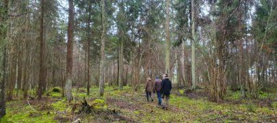 Kontrolli üle oma metsa tervislik seisund!