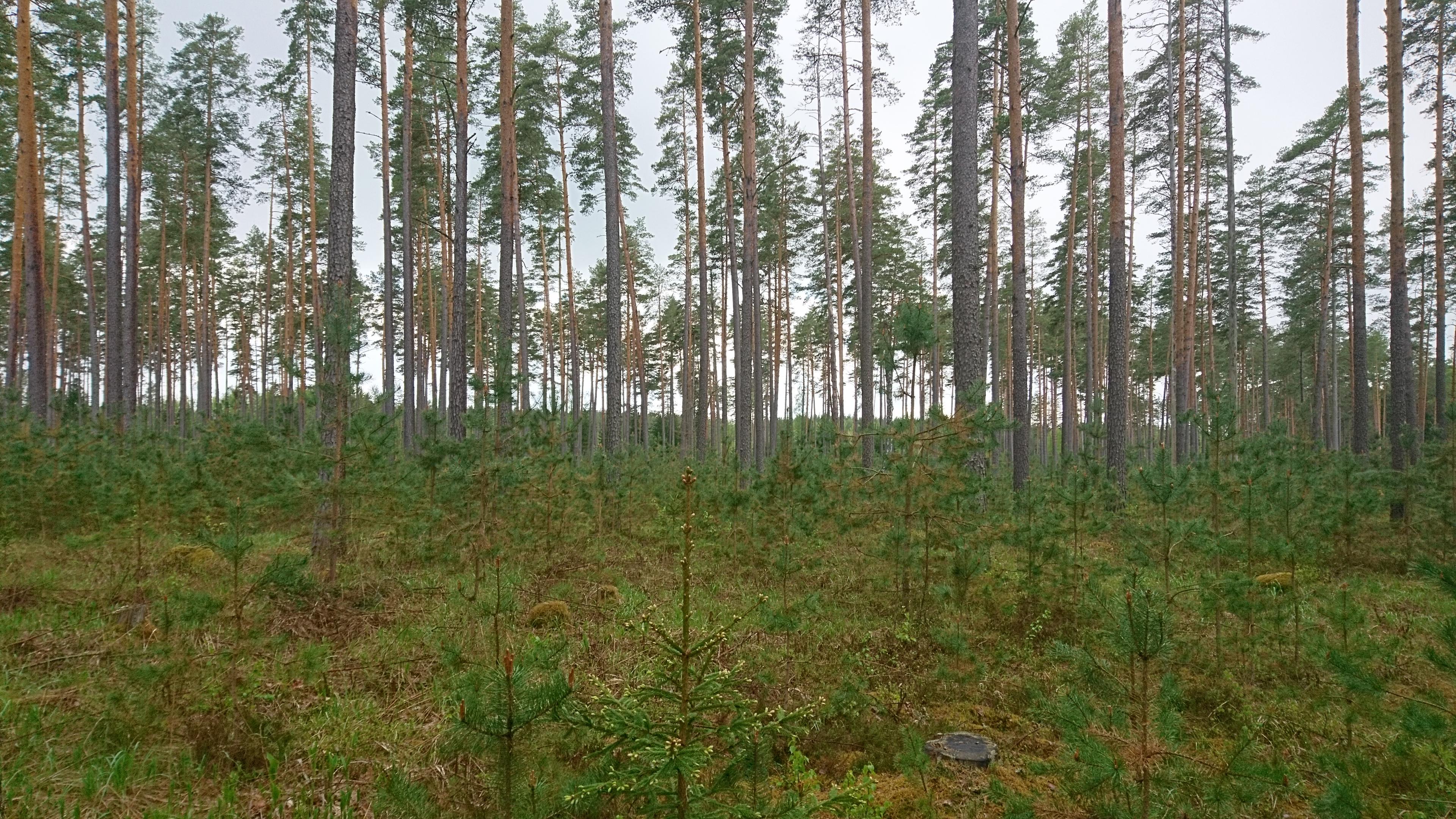 Erametsaliit kutsub rahvusvahelisel metsapäeval metsa