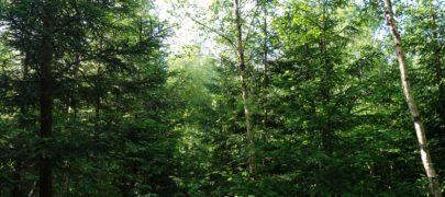 Heitunud metsaomanikud müüvad maa maha