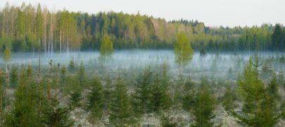 Erametsaliidu soovitused linnusõbralikumateks metsatöödeks