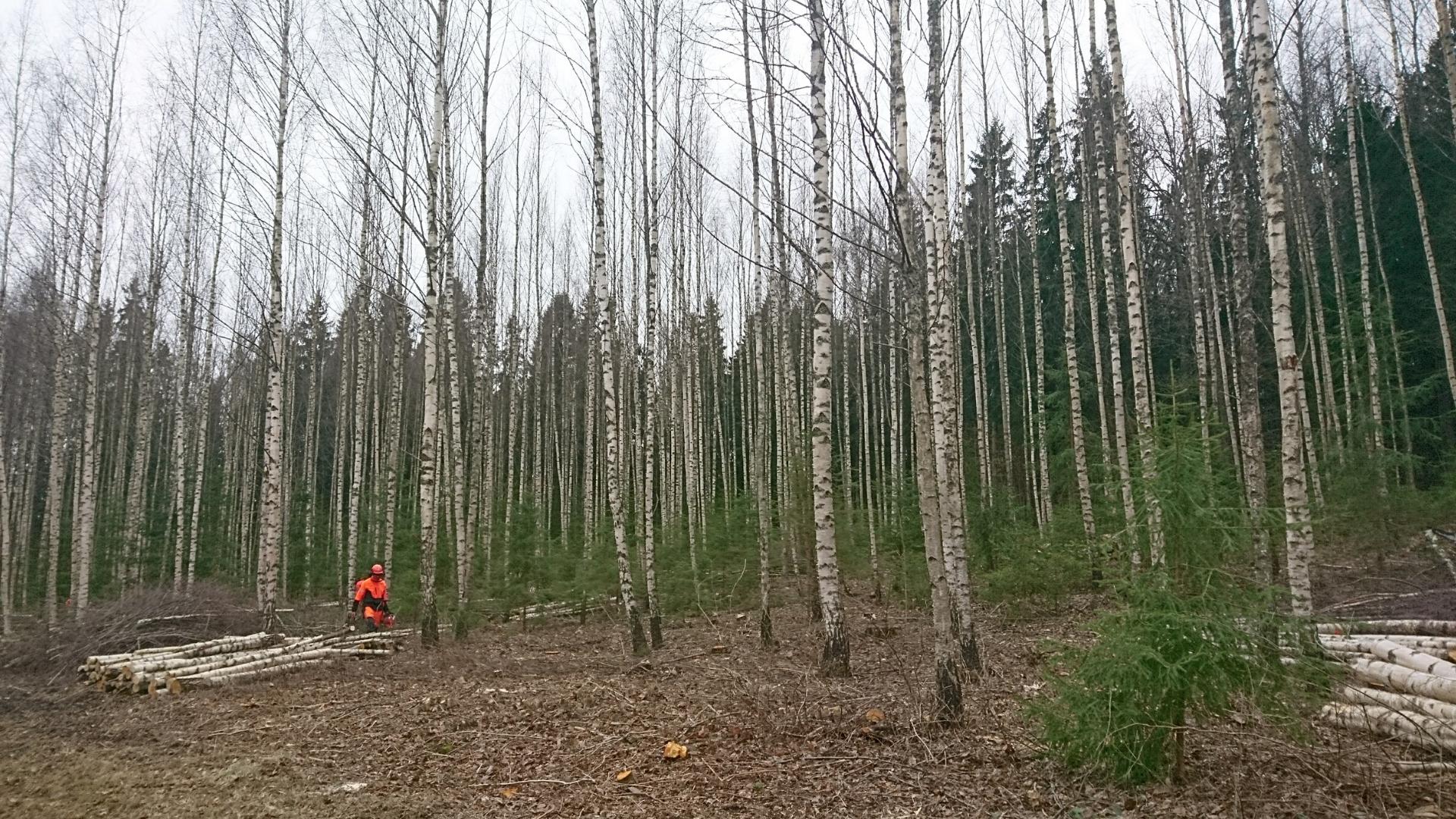 Huvi metsas töötamise vastu on hüppeliselt kasvanud