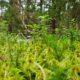 Erametsaomanike lai ring tagab metsamajandamise kestlikkuse