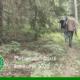 Otsime parimat metsamajandajat!