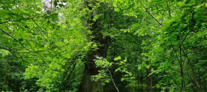 Elurikkuse päev! Metsaomanikel on oluline roll elurikkuse hoidmisel
