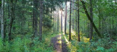 Ando Eelmaa: metsast ja tarbimisühiskonnast, emotsiooniga