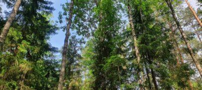 Metsaomanikud ootavad metsahoolduse toetamise jätkumist