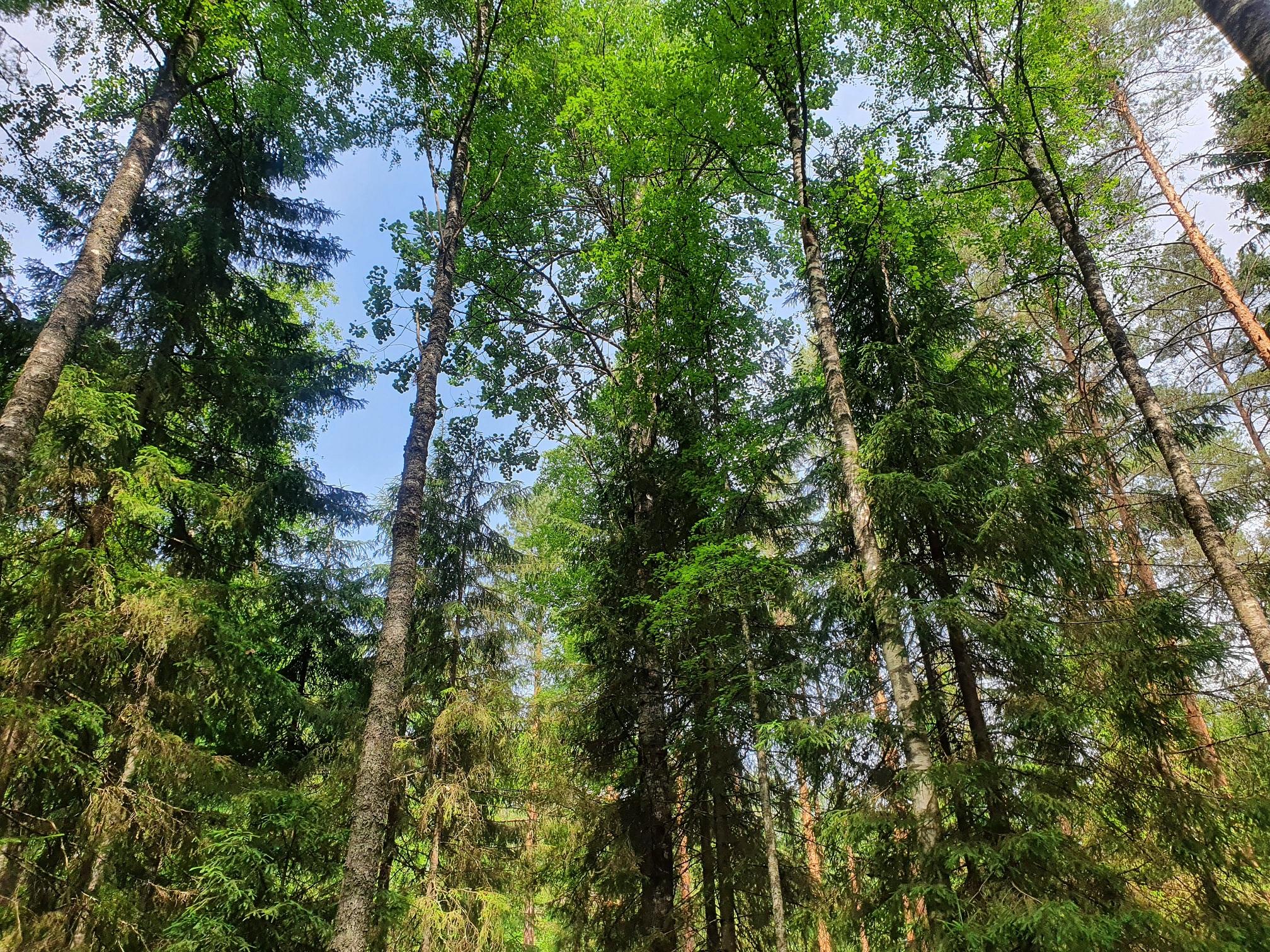 Erametsaliit: aeg on maadevahetus tagasi tuua