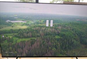 Üraskikahjustatud mets Rally Estonial