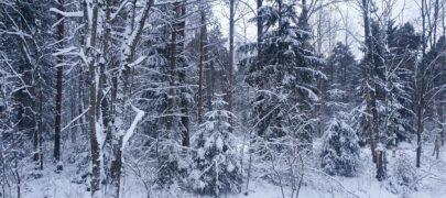 Metsasektor: rohepööre peab olema uue valitsuse üks prioriteete