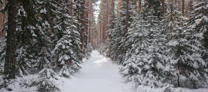 Looduskaitset planeeritakse maaomaniku selja taga