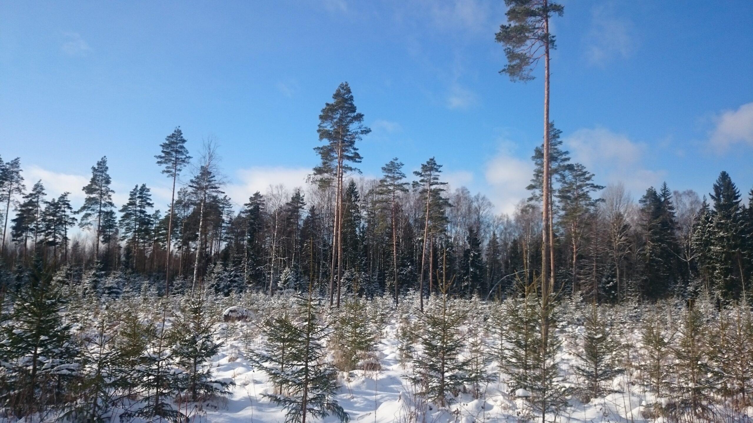 Metsaomanike esindajad kohtusid maaeluminister Urmas Kruusega
