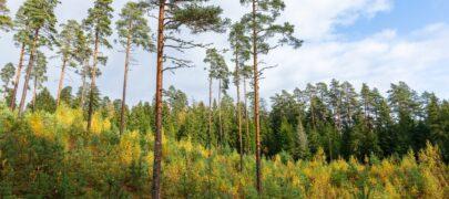 Looduskaitse piirangud ei peaks olema üksnes maaomaniku kulu