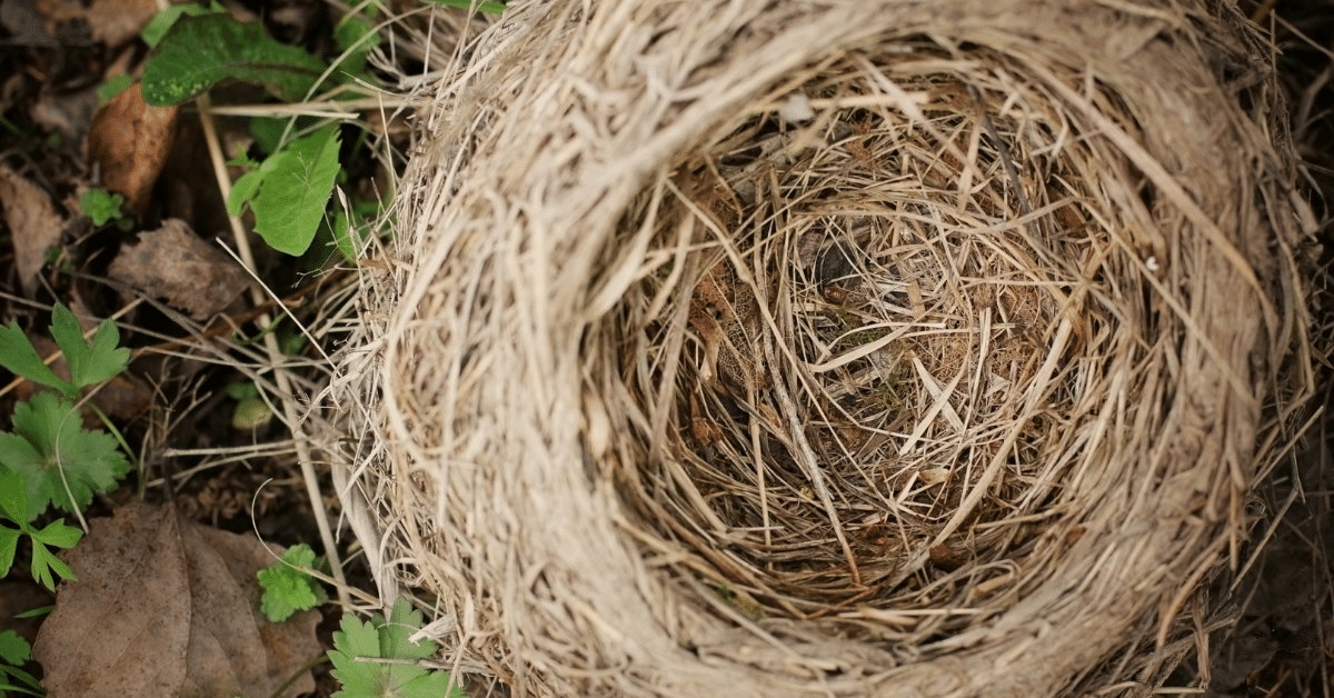 Kuidas kevadsuvistel metsatöödel linde vähem häirida?