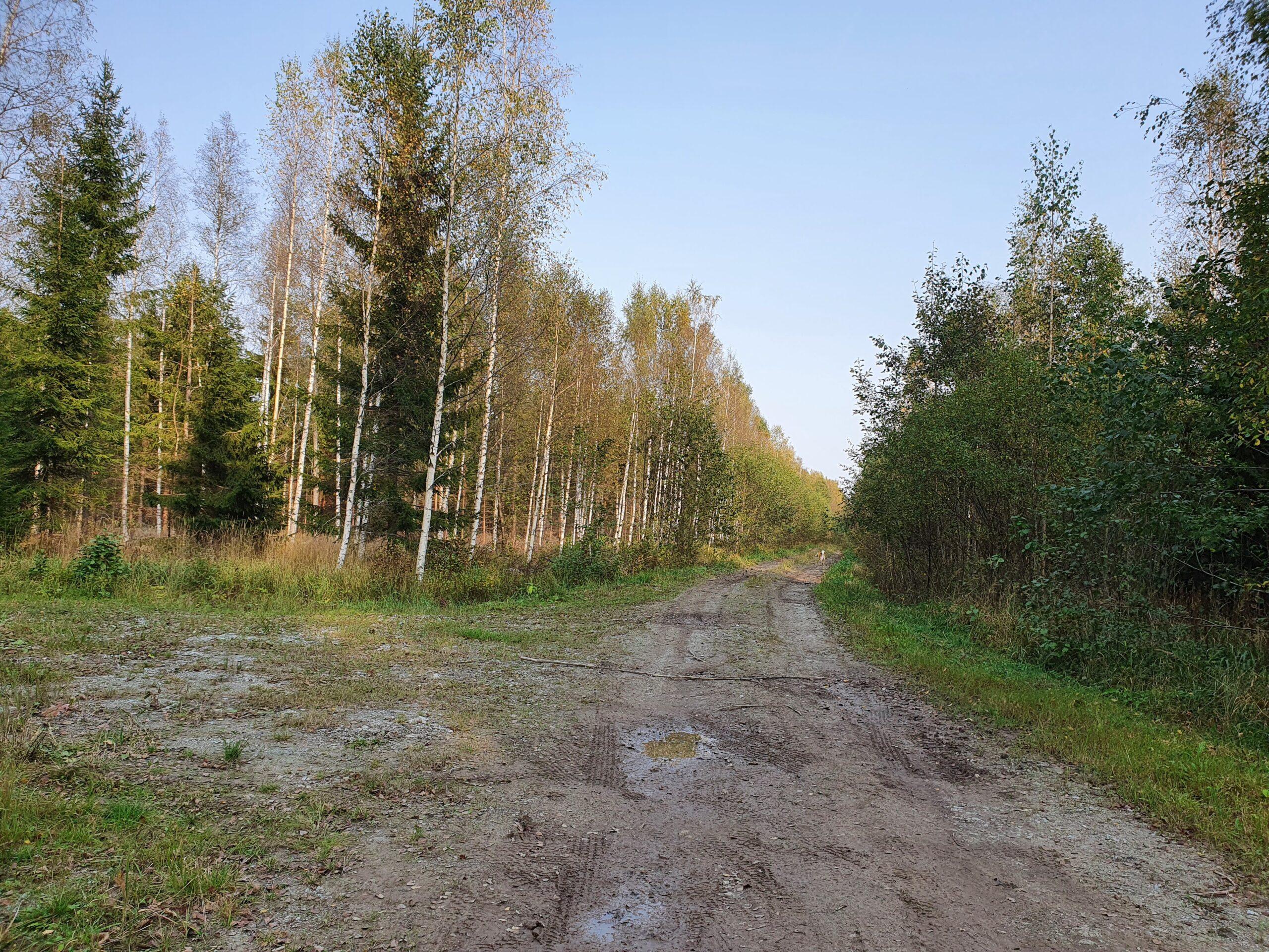 Eesti Erametsaliit taunib Postimehe isiklikku rünnakut Alutaguse elanike vastu