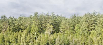 MTÜ Ühinenud Metsaomanikud teade jahimeestele