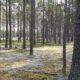 Erametsaliit kiidab keskkonnaministrit metsaomanike huvide eest seismise eest