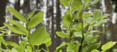 METSAOMANIKE ÕPPEPÄEVAD – Metsakasvukohatüübid 4. ja 11. august